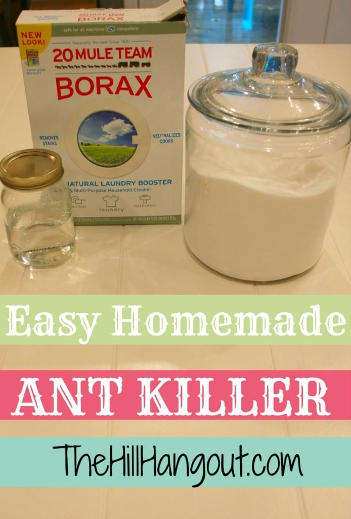The Best Homemade Ant Killer The Hill Hangout